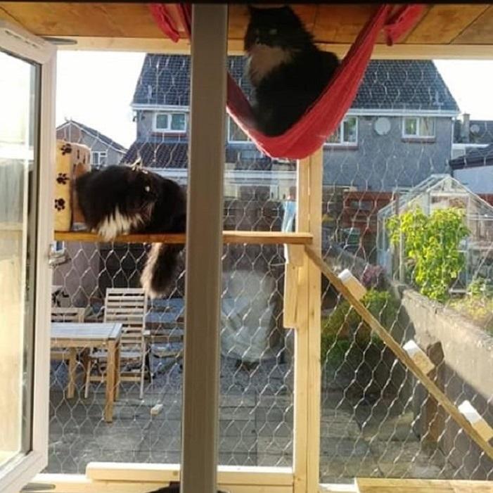 Чтобы можно было спокойно открывать окно, не опасаясь побега питомцев, девушка придумала для них кошачий дворик: фото