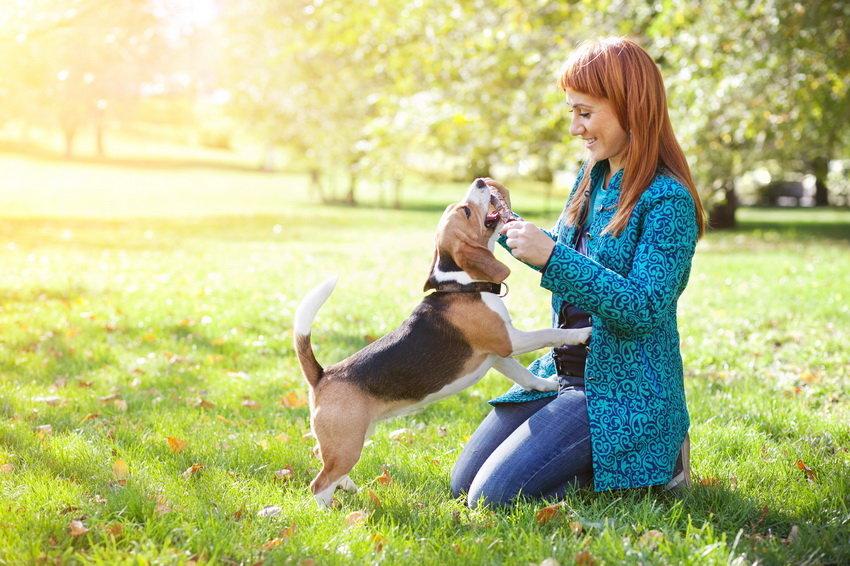 Dogger - первое приложение для собак и их владельцев в России