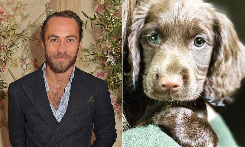 Брат Кейт Миддлтон Джеймс похвастался в соцсетях своим хвостатым семейством и новым щенком