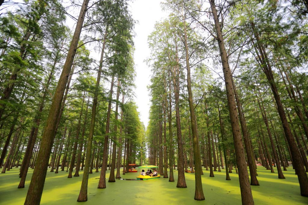 Туристы здесь - яркие островки: геометрические леса на воде в Китае