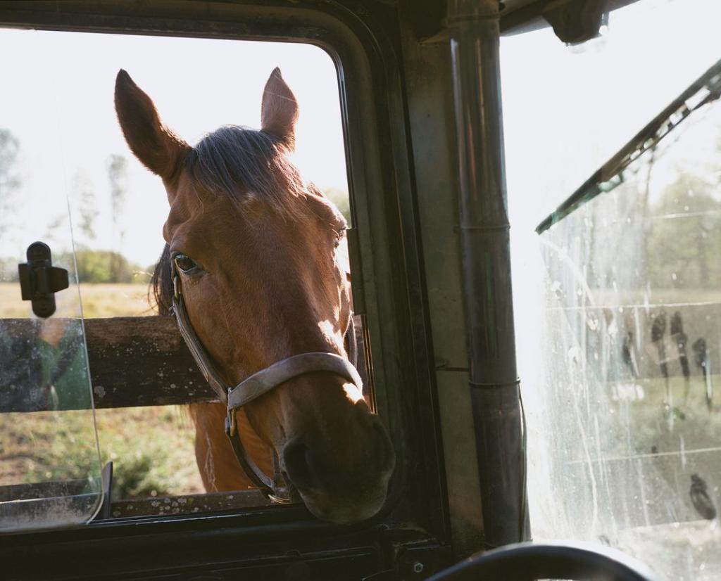 Если пенсионер - лошадь. Как живут отставные скакуны, принесшие когда-то своим хозяевам тысячи долларов