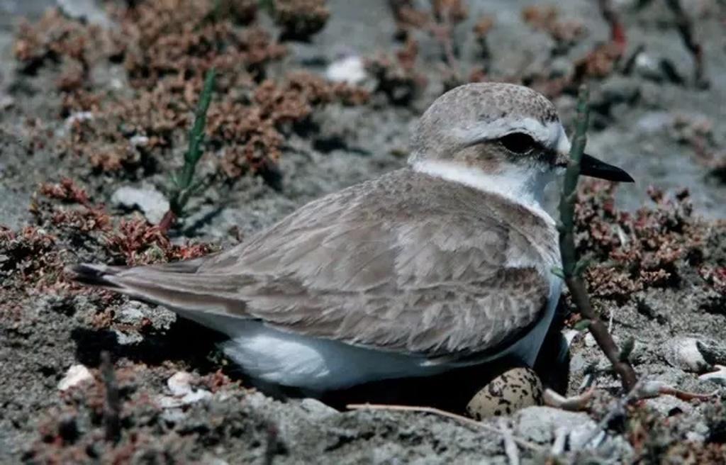 Птицы воспользовались отсутствием людей и свили гнезда на опустевших пляжах