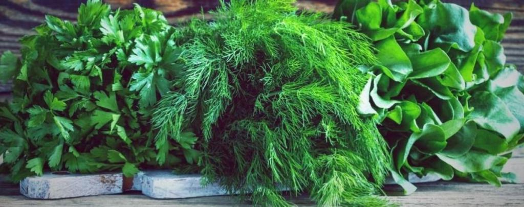 Бабушка научила правильно хранить зелень. Теперь сорванный укроп остается свежим на протяжении месяца