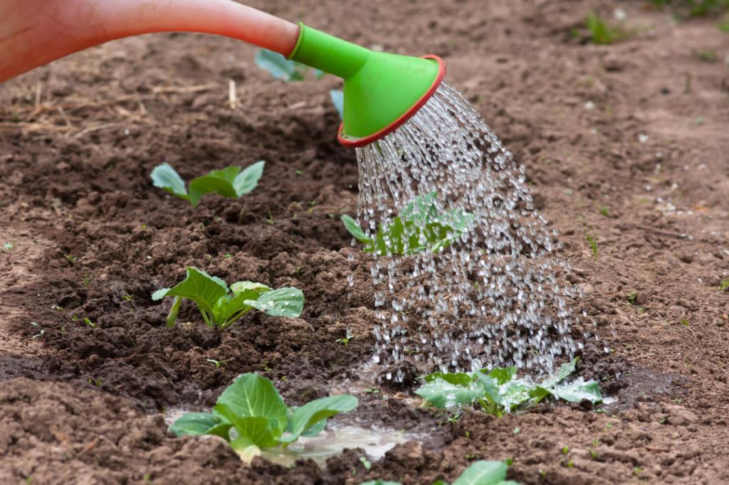 Перегной и зола в лунки. 5 советов, как вырастить хороший урожай капусты