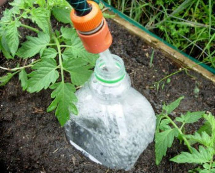 Увидела у соседки на огороде между кустами помидоров пластиковые бутылки. Себе тоже так сделала: лайфхак