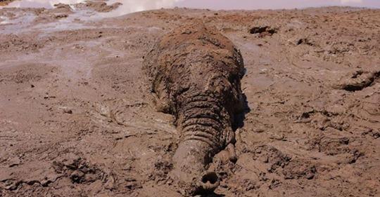 Слон по уши увяз в трясине из грязи на краю дамбы