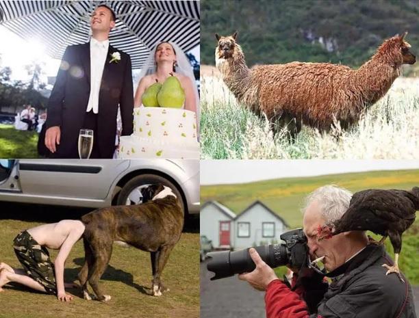 Слови момент! 15 забавных кадра, пойманных фотографом в идеальный момент