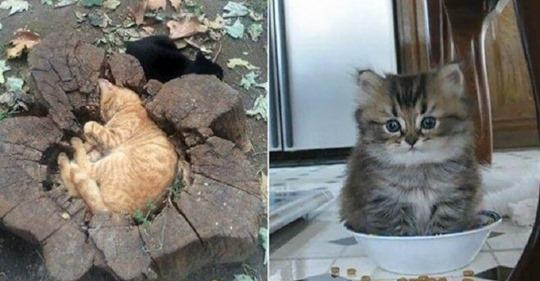 20 неопровержимых доказательств, что кошки поместятся где угодно