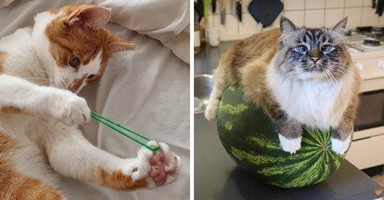 16 фотографий кошек, котов и котят, для которых совершенно не нужен повод, чтобы на них посмотреть