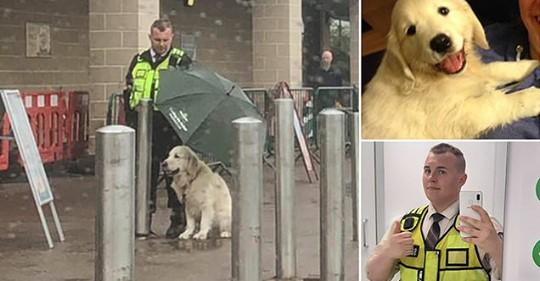 Поступок охранника, который укрыл чужого пса зонтом, растрогал соцсети