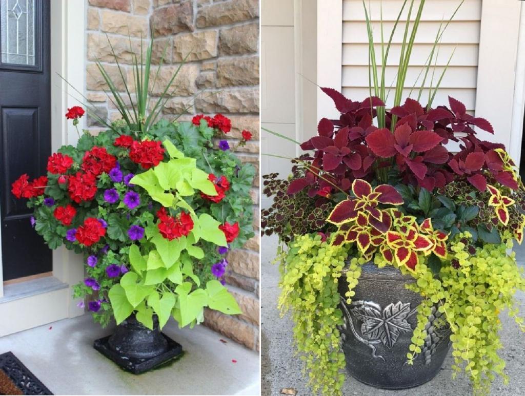 Комбинация ярко-зеленого и темно-красного: идеи, как необычно украсить двор цветочными композициями в горшках
