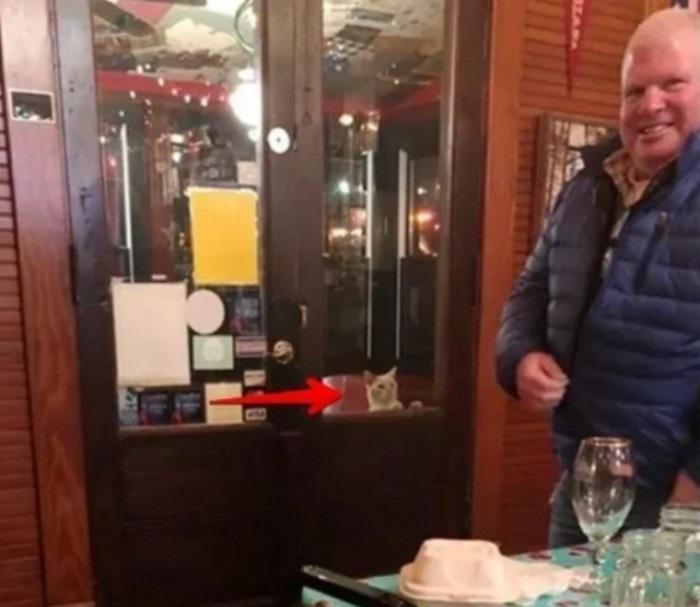 Супруги обедали в ресторане и заметили, что за ними наблюдают: так в их доме появился очаровательный питомец