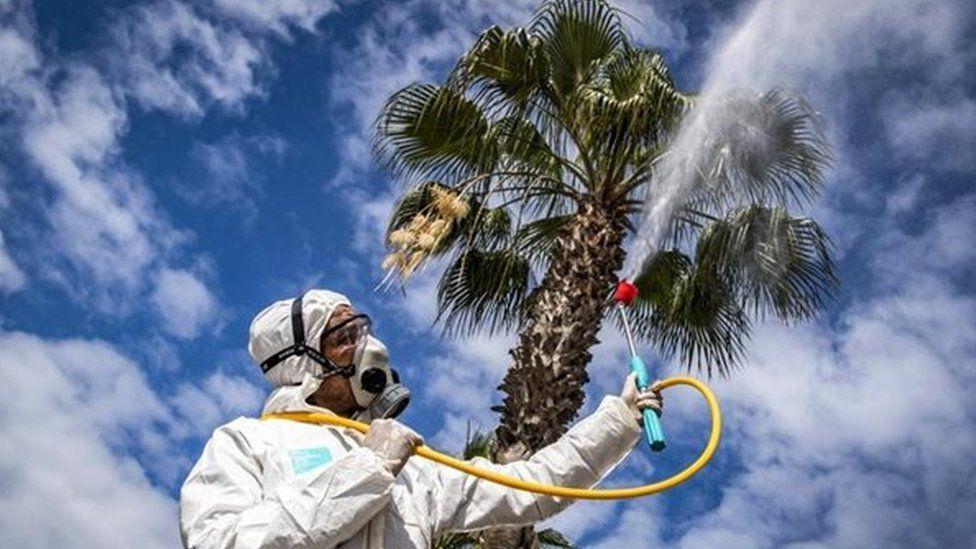 Коронавирус не любит влажный воздух: статистика от ученых
