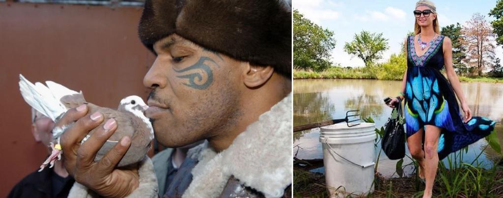 Майк Тайсон разводит голубей, а Пэрис Хилтон ловит лягушек: чем занимаются звезды на карантине