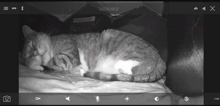 Мужчина установил видеонаблюдение, чтобы проверить, приходит ли бездомная кошка в домик, построенный для нее