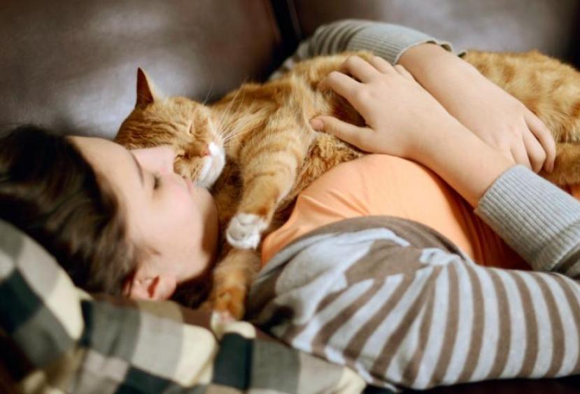 Рыжие кошки дарят позитивную энергетику. Как разные породы котов влияют на здоровье человека
