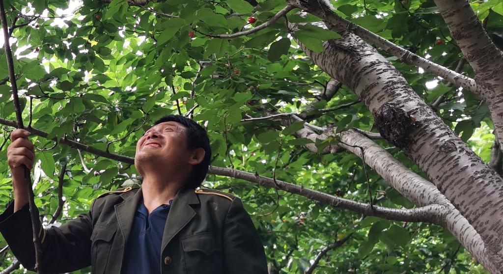 До последней ягодки. Мужчина показал, каким приспособлением они с женой собирают вишню и черешню с высоких деревьев