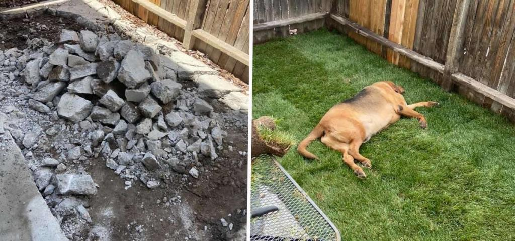 У собаки спасателя никогда не было своего уголка: женщина сделала ей подарок