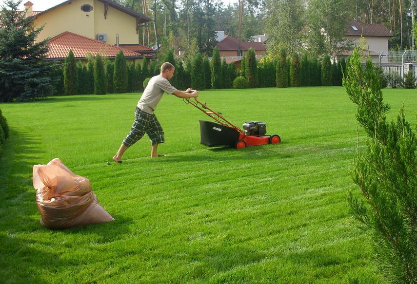 Хитрые грядки для кабачков и патисонов: кучи скошенной газонной травы