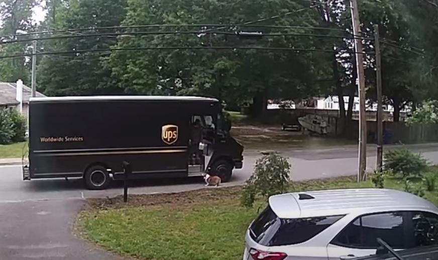 В США маленький корги захотел покататься на грузовике доставки (видео)