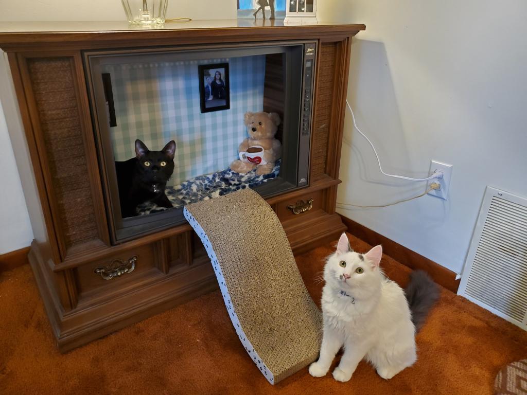 Не стали выкидывать бабушкин телевизор: из него получился уютный домик для кошек