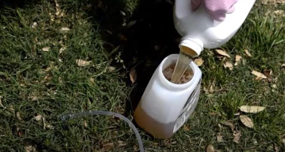 Смешиваю пиво, соду и шампунь и поливаю лужайку перед домом раз в 2-3 недели