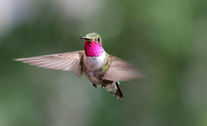 Фантастическое зрение: птица-пересмешник видит цвета, которые человек не может себе даже представить