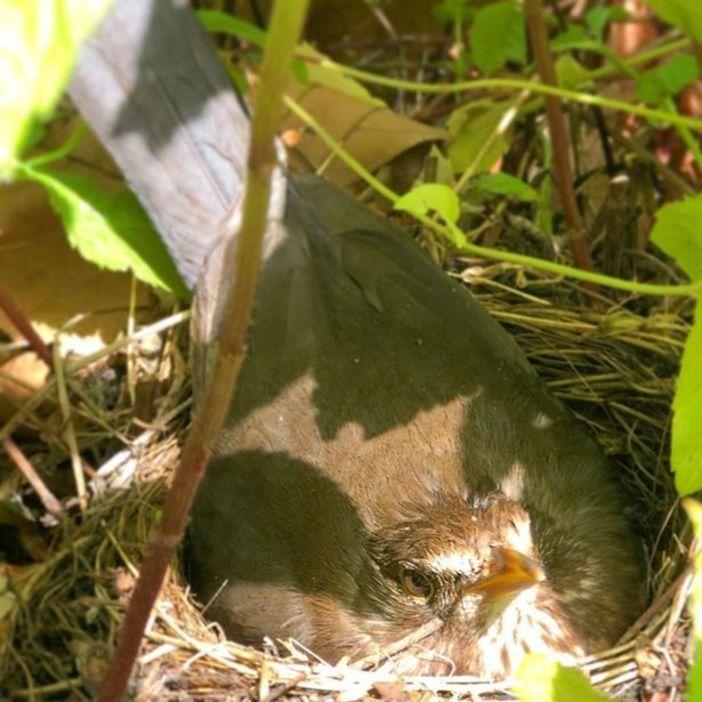 Владелец нашел гнездо на крыше и решил не открывать бар после отмены карантина
