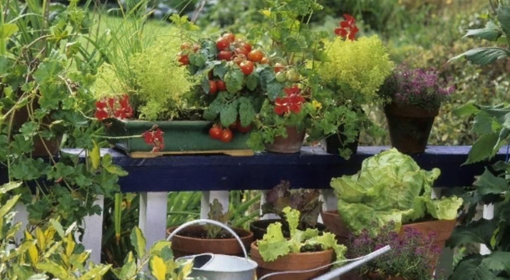 Огород на дому: советы специалистов по выращиванию овощей на балконе