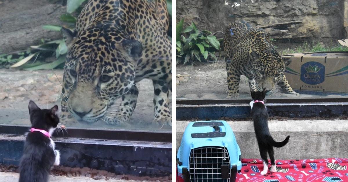 В зоопарк привели собак и котят из приюта, чтобы познакомить их с местными животными. И их встреча — мимими!
