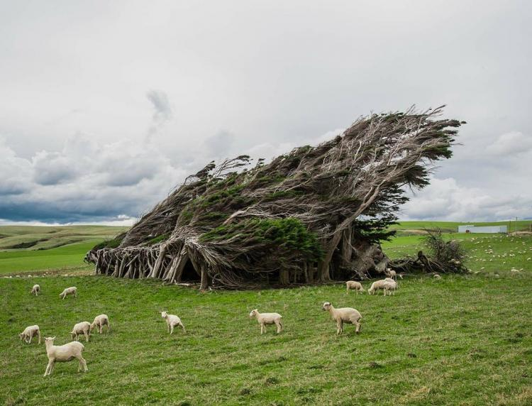 Люди приезжают со всего мира, чтобы посмотреть на удивительные деревья