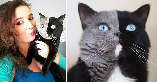 Двуликий кот стал отцом, и природа снова смогла удивить: фото оригинальных котят