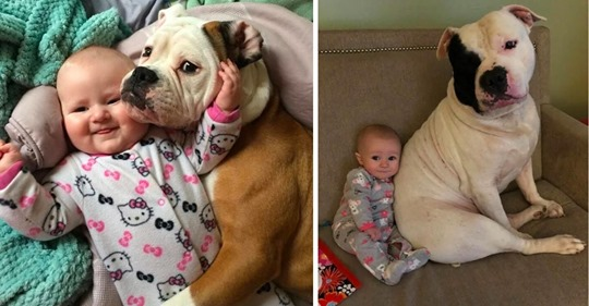 11 фото доказательств того, что вашему ребенку необходимо домашнее животное