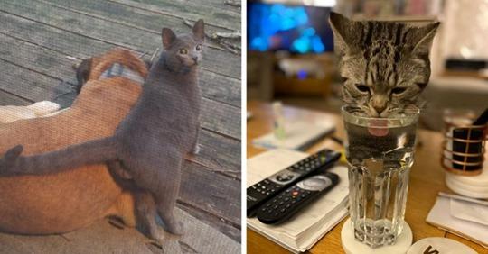 15+ ситуаций, когда люди обнаруживали у себя дома котов. Но это были вообще не их коты!
