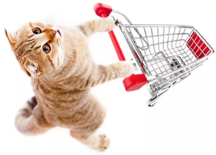 Все для кошек: кормление, здоровье, гигиена, комфорт