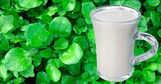 9 продуктов содержат в несколько раз больше кальция, чем молоко и молочные продукты! Их стоит употреблять каждый день!