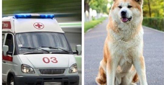 Медбрат пытался прогнать собаку, которая преградила дорогу скорой помощи, но она но собака все равно не ушла