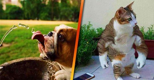 13 весёлых и позитивных фотографий животных из соцсетей со всего мира