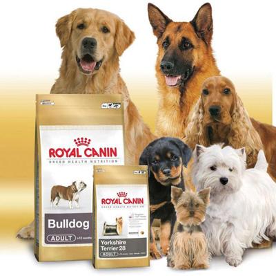 Сухой корм для собак: преимущества и плюсы