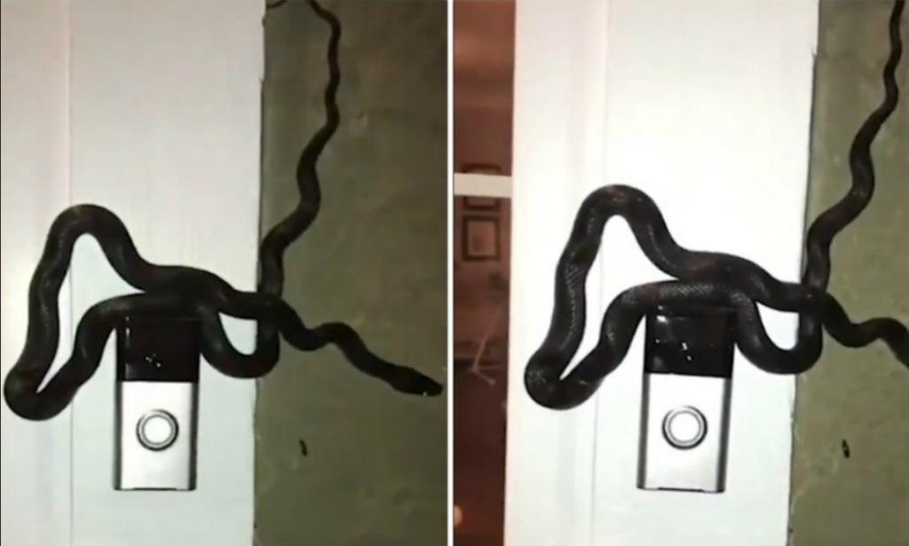 Необычный злоумышленник настойчиво звонил в дверь: сначала хозяин дома никого не увидел