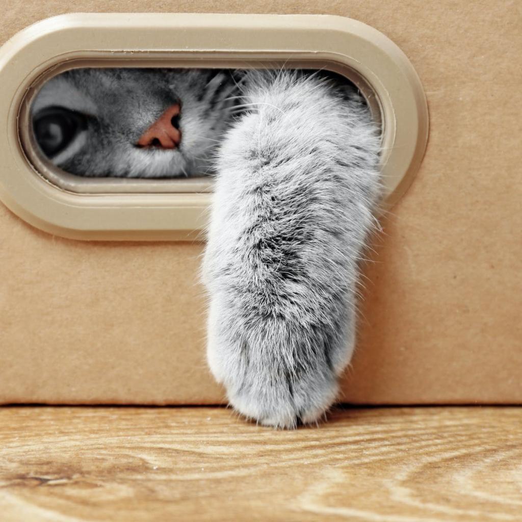 Комфорт им тоже важен: какой наполнитель следует использовать для кошачьего туалета (и какие коробки им подойдут)