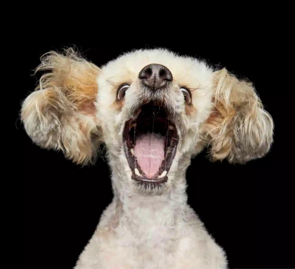 Фотограф делает веселые фото собак: глядя на них, хочется улыбнуться