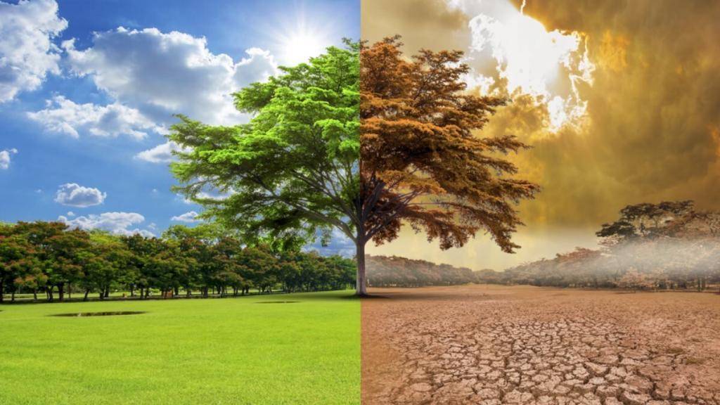 Перед нами стоят сложные задачи: метеорологи предрекли изменение климата в ближайшее время