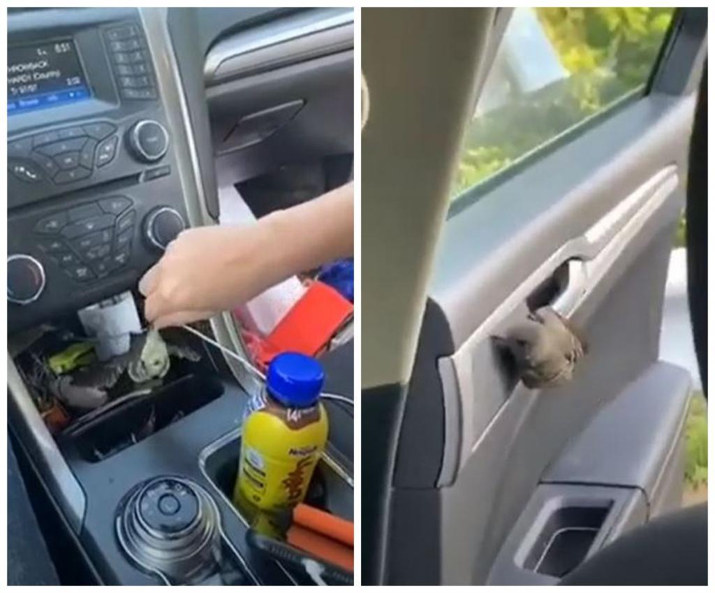 Какая настойчивая! Девушка намучилась с птицей, пытаясь выставить ее из салона авто (смешное видео)