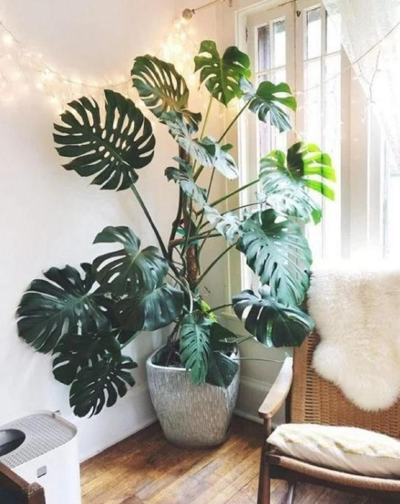 Если кажется, что в интерьере чего-то не хватает, задумайтесь о комнатных растениях. С ними ваш дом оживет