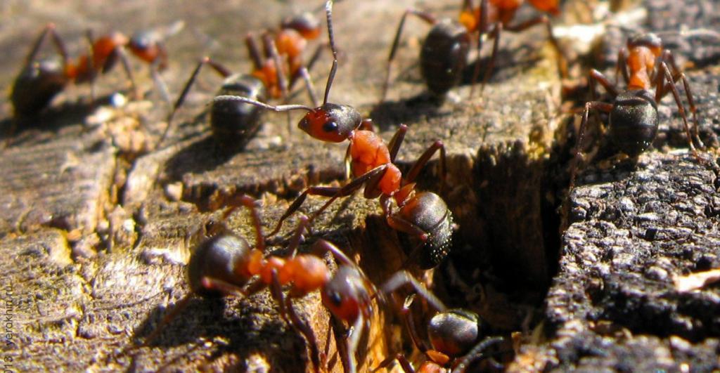 Сосед по даче раскрыл хитрый способ борьбы с муравьями: желток и разрыхлитель