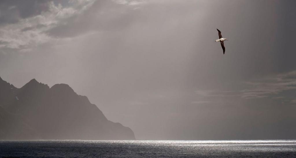 Морские стражи: ученые наблюдали за жизнью альбатросов с помощью прикрепленных трекеров, а птицы указали на браконьеров