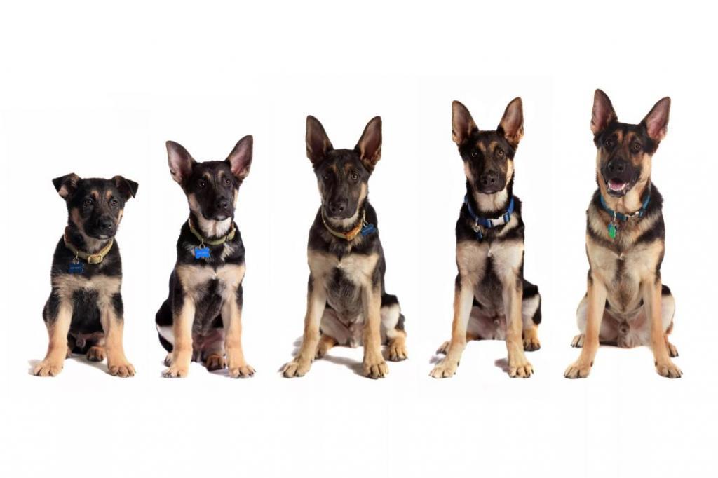 Ученые пересмотрели систему соотношения возраста человека и собаки
