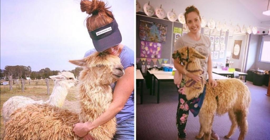 Он совсем, как щенок с длинной шеей!: девушка завела себе альпака, которого обожает весь город