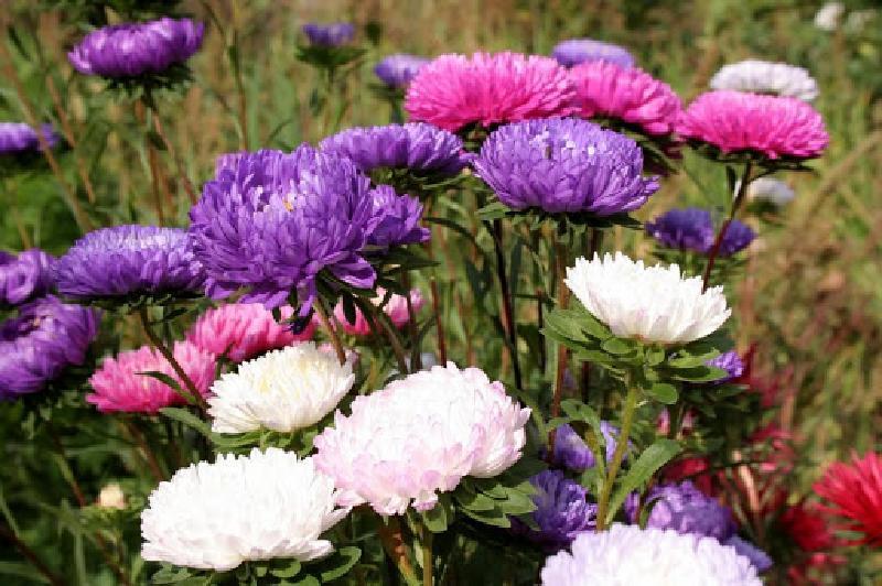 Садоводы рассказали о неприхотливых растениях, которые помогут украсить участок